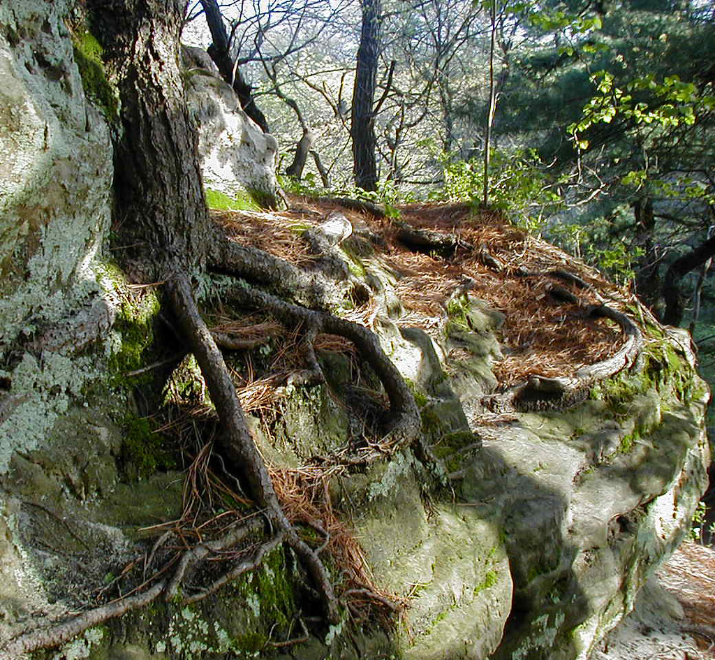 Top of the Snake Head. The tree root give an easy grip for ...