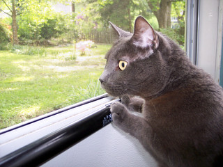Darn Cat (Buddy) Looking Out of Screen Door (5) 5-18-07 | by the bridge