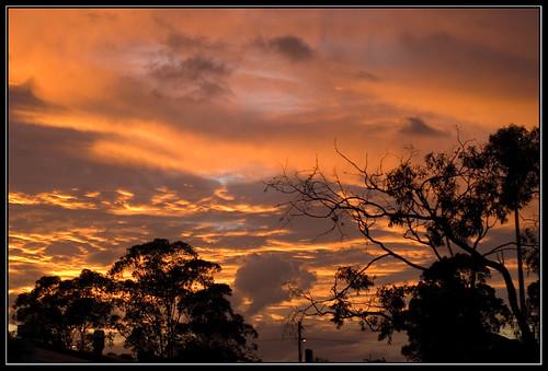 blue sunset orange cloud tree grey pentax ds ist digitalcameraclub auselite