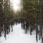 Covey Meadow Trail