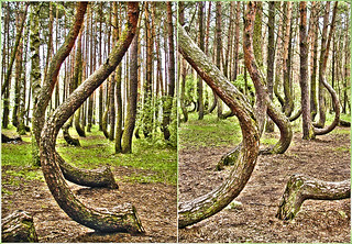 Crooked Forest Gryfino Poland Tapenade Flickr,Funny Animal Pictures With Captions Clean