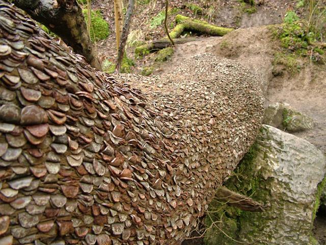 Money Tree, Swilla Glen, near Ingleton, N.Yorkshire, UK