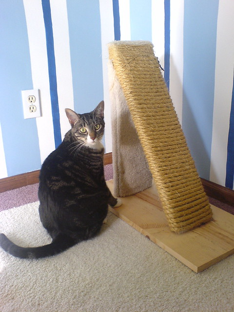Blaise and the scratching post