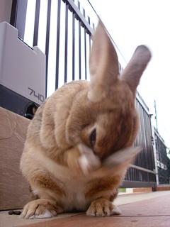 Rabbit uber fast hand