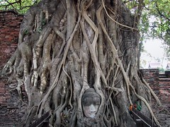 Ayutthaya 18