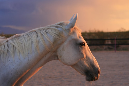 sunset arizona horse white animal tucson explore doubletake equestrian