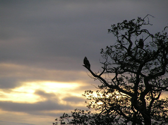Bird again