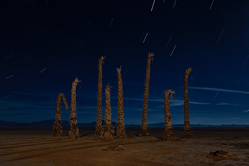 eyetwistkevinballuff eyetwist dead palm trees abandoned wasteland california mojavedesert dark night longexposure long exposure fullmoon moonlight mojave desert nikon nikond7000 d7000 nikkor capturenx2 1024mmf3545g photography tripod npy nocturne highdesert roadside america americana americantypology landscape startrails star trails american typology palmtrees tree lucernevalley lucerne valley barstow failed subdivision development empty shadows sodiumvapor light intersection ruin desolate lonely greatrecession failure nihilist