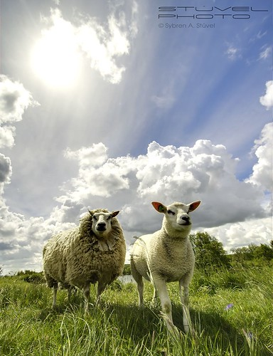 Awesome Sheepies | by Sybren A. Stüvel