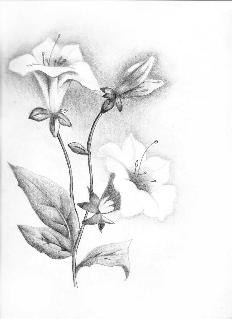 Flores Desenho A4 Sombreado Lapis Preto 6b Danillo