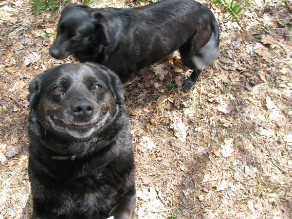SMILING DOG!