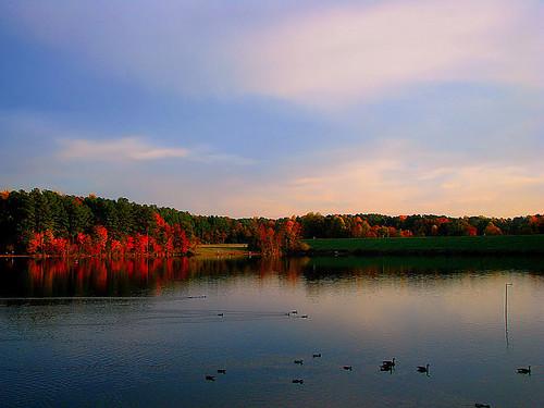 autumn trees sunset lake reflection fall nature water colors swim landscape outdoors evening geese nc north ducks northcarolina raleigh carolina shelley waterscape chrysti shelleylake platinumphoto