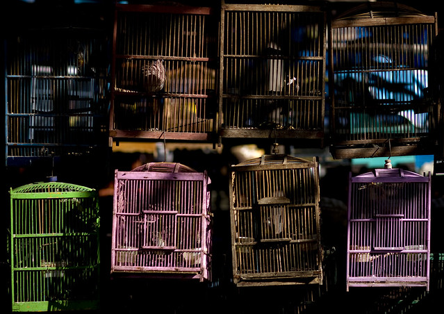 Bird cages at the market, Java, Indonesia