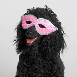 poodle mask | by Lyons, Tigers, and Bears...Oh My!