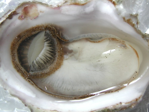 Oyster - ready to slurp | by Basenisa