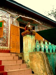 Monkey, Mount Popa, Burma