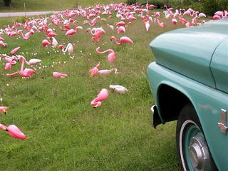 Pink Flock | by cogdogblog