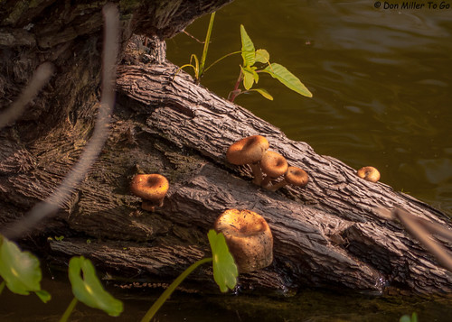 plants nature water mushrooms wooden log gf1