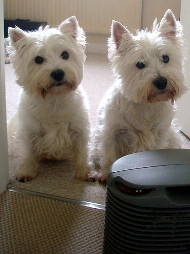 ... Alice and Daisy (R.) find the fan heater ... | by bazzadarambler