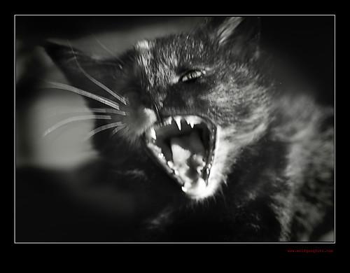 fear of  a little cat