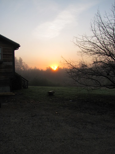 tree love fog sunrise foggy kristen cates sooc