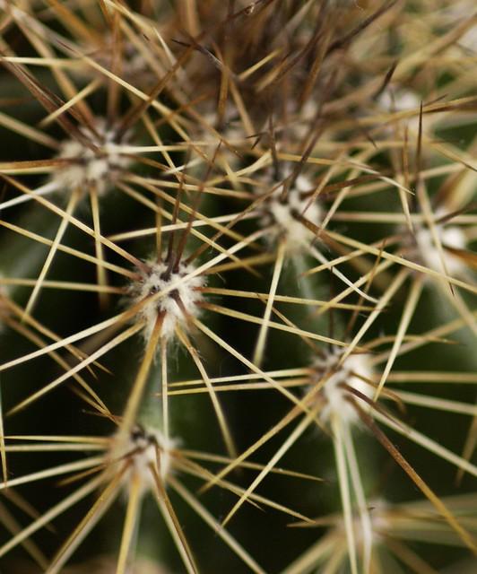 More Saguaros