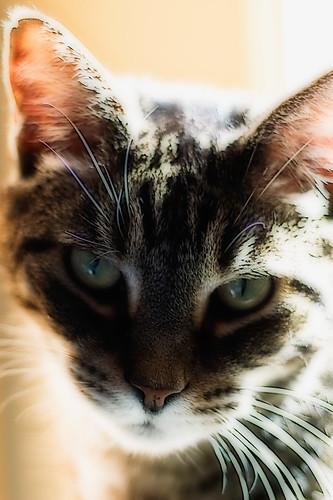 cat photoshop nikon bandit d40 abigfave acreestudios