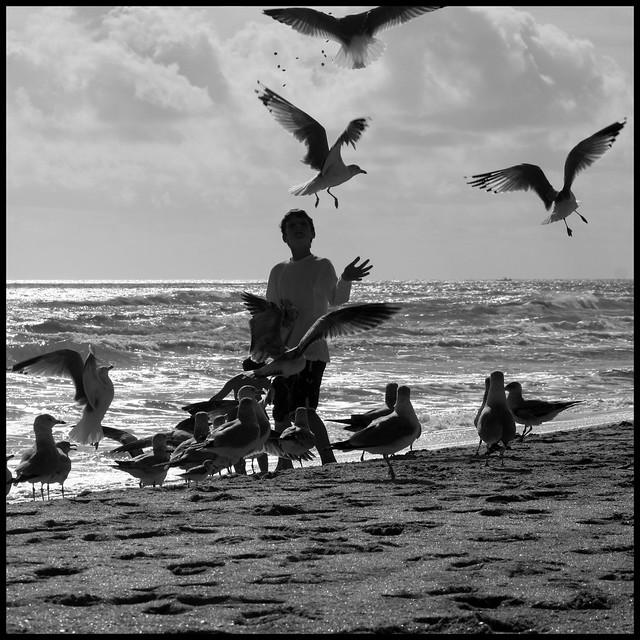 Seagull training school - Jupiter, Florida
