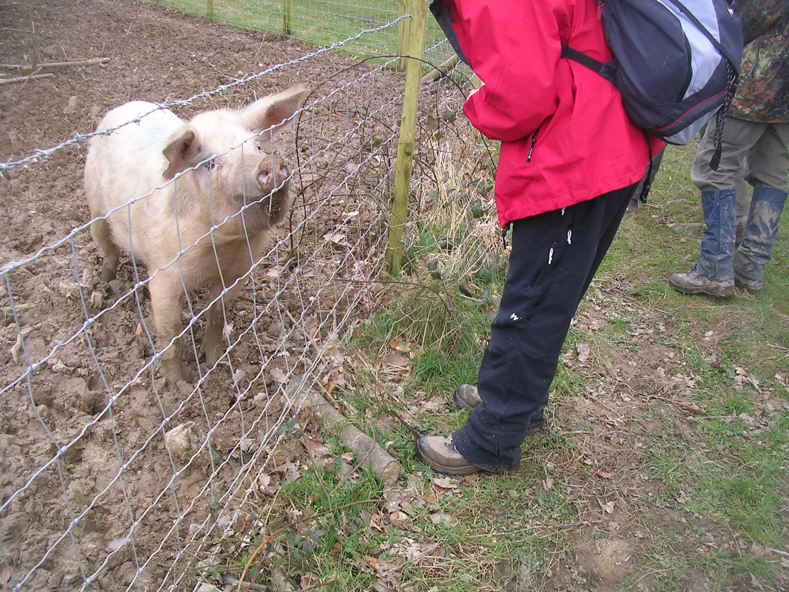 pig friend Chilham to Canterbury