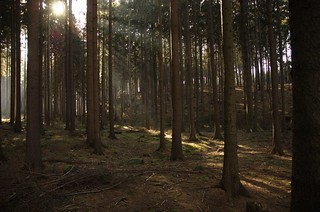 Deep forest :-) | by Honza Soukup