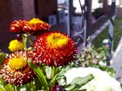 Abdeli Flowers