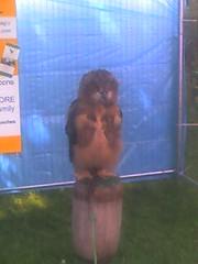 giant owl again