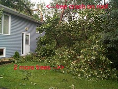 windstorm-treedown1-2-3