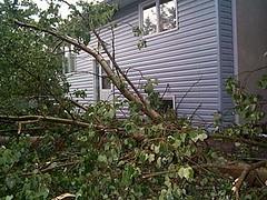 windstorm-treedown2-3