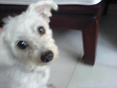 Blurred Dog