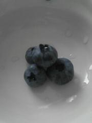 収穫した4つのブルーベリーです