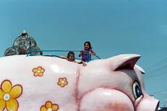 pig's eye view
