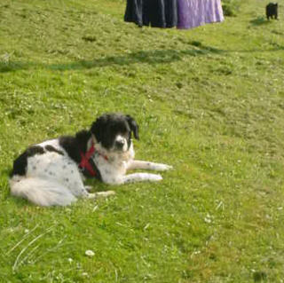 Lily enjoying the sunshine and breezes