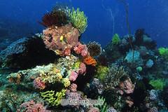 Esponjas, corais e tudo o mais