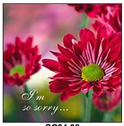 sorry-5