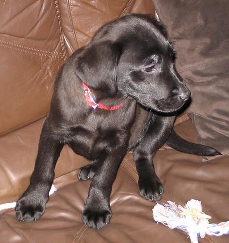 Puppy Megan