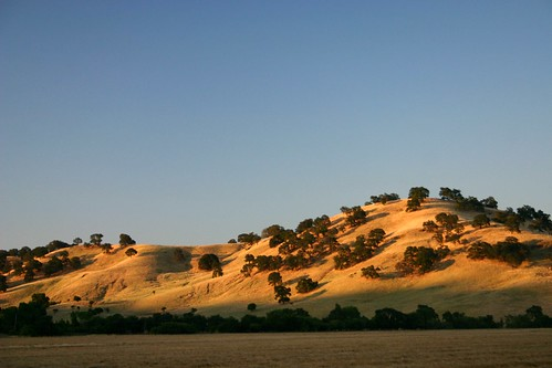 the hills of california | by Genista