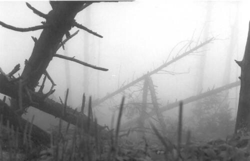 Creepy Burnt Forest