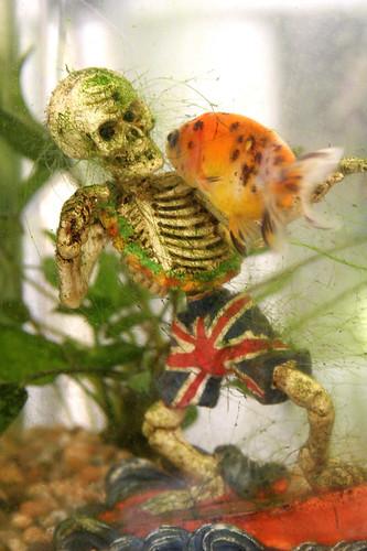 SkeletonFish