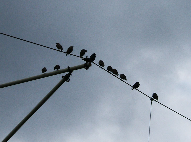 birds on cable