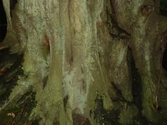 Tree at Westerham