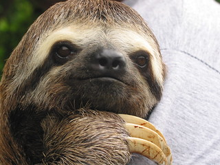 Sloth in the Amazon | by Praziquantel
