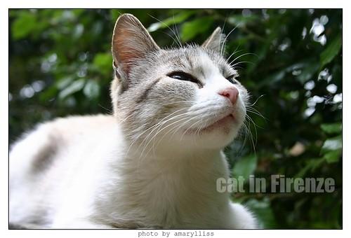 cat-firenze0608-03