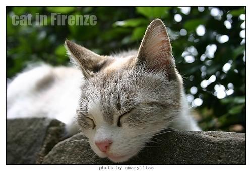 cat-firenze0608-07