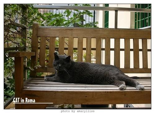 cat-roma0602-1